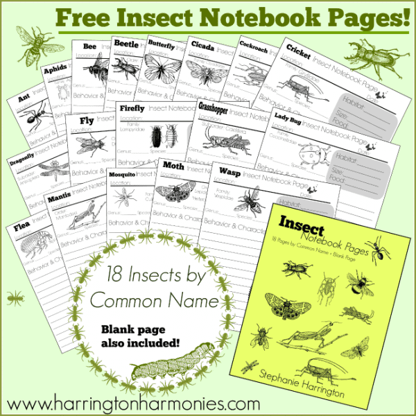 Free-Insect-Notebook-Pages-Complete-600x600