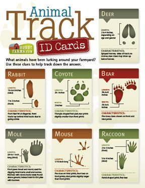 free animal tracker id cards