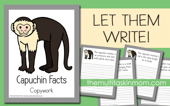 Let-them-write-about-the-capuchin-and-have-fun-learning