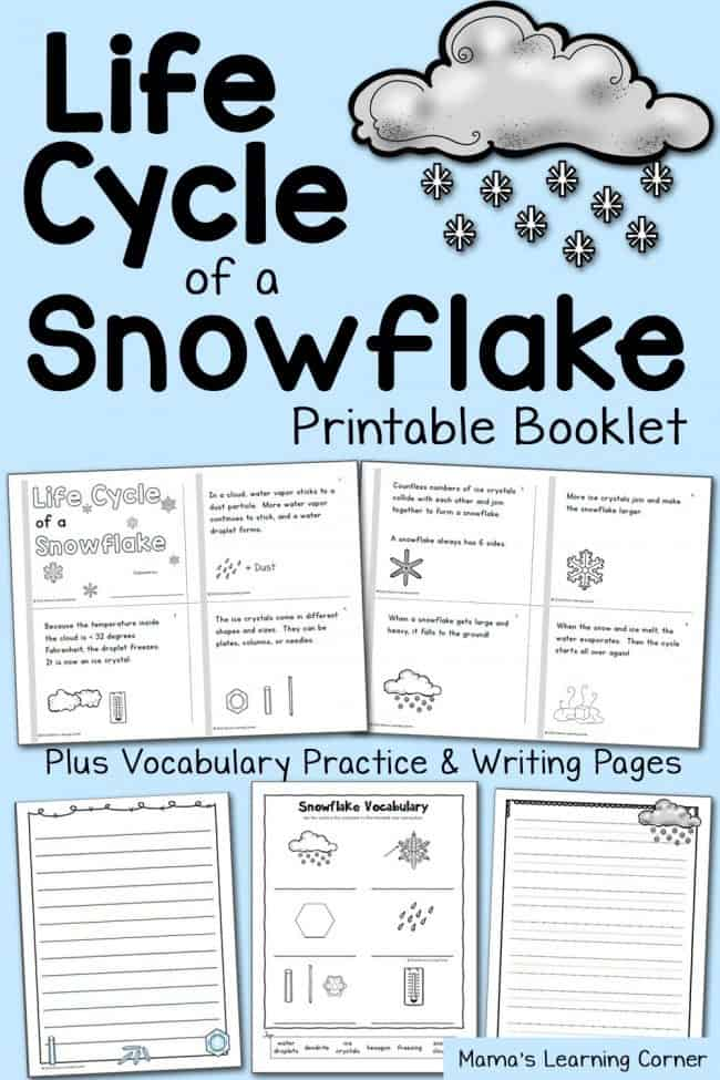 Snowflake-Life-Cycle-Booklet-and-Vocabulary-Practice-650x975