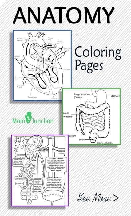 - FREE Printable Anatomy Coloring Pages - Homeschool Giveaways