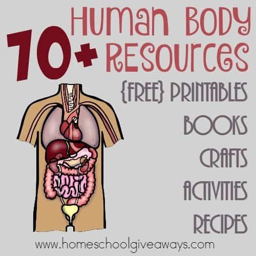 Are you studying the Human Body this year? Check out these great resources for teaching your kids through printables, books, crafts, recipes and more! :: www.homeschoolgiveaways.com