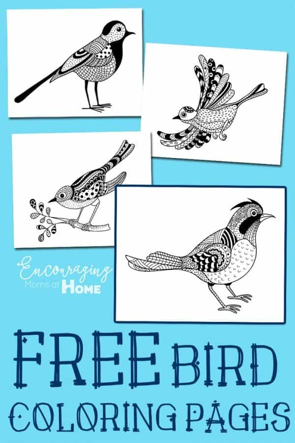 FREE-BIrd-Coloring-Pages-600x900