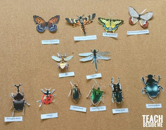 paper-insect-display-for-kids-1024x798