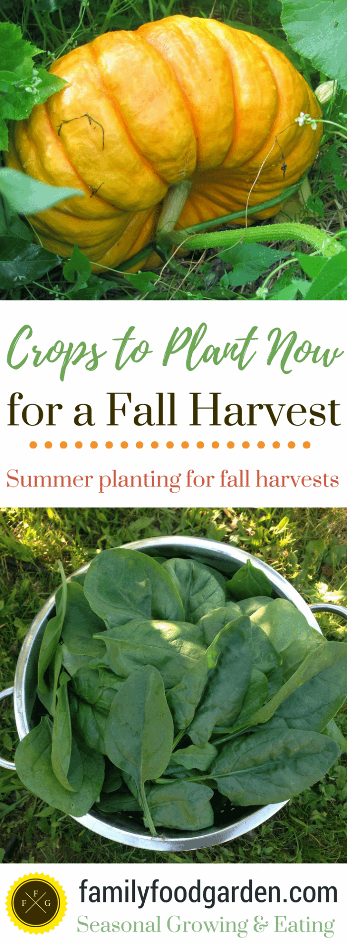 Crops-to-Plant-for-a-Fall-Harvest