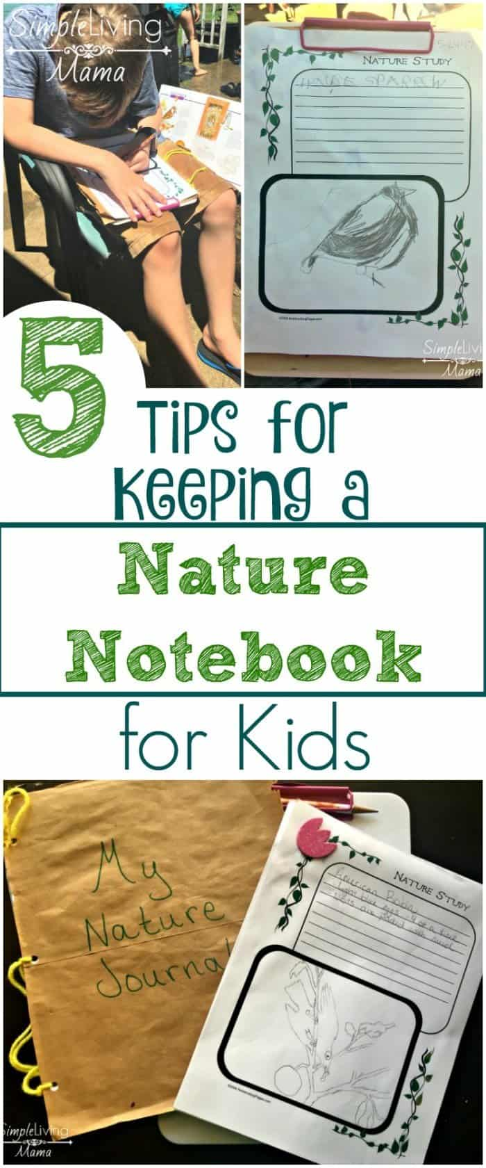 5-Tips-for-Keeping-a-Nature-Notebook-for-Kids