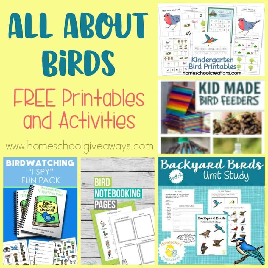 All About Birds Free Printables And Activities Homeschool Giveaways