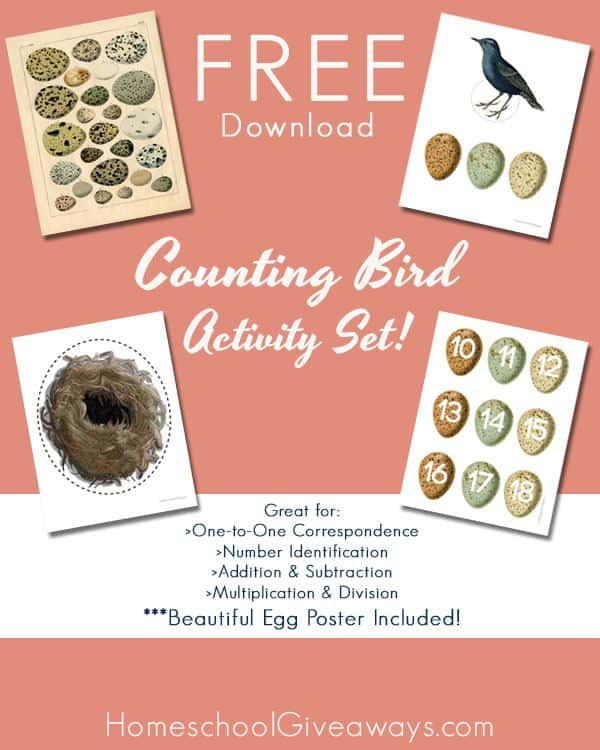 Counting Birds FREE HSG