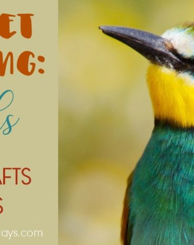 Whether you're itching for more Spring weather, studying birds or just like crafting, these crafts are sure to get your kids excited! :: www.homeschoolgiveaways.com