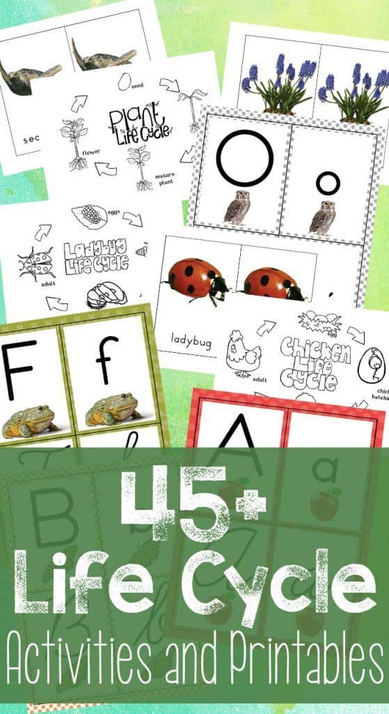 45-Life-Cycle-Activities-and-Printables-559x1024