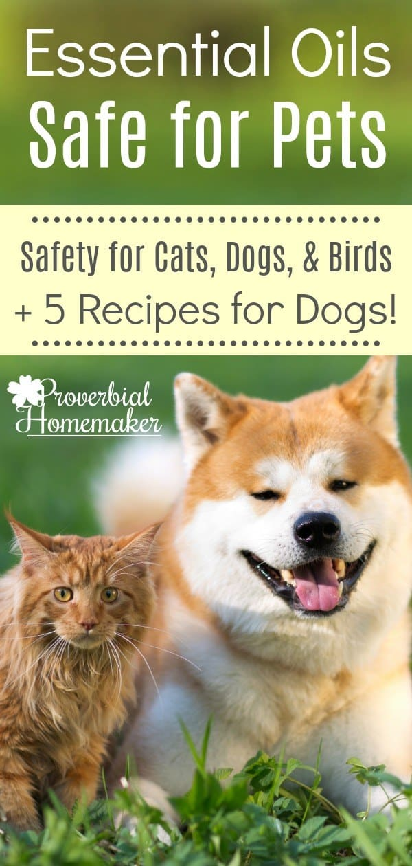 Essential-Oils-Safe-for-Pets-5-Essential-Oil-Recipes-for-Dogs-PIN