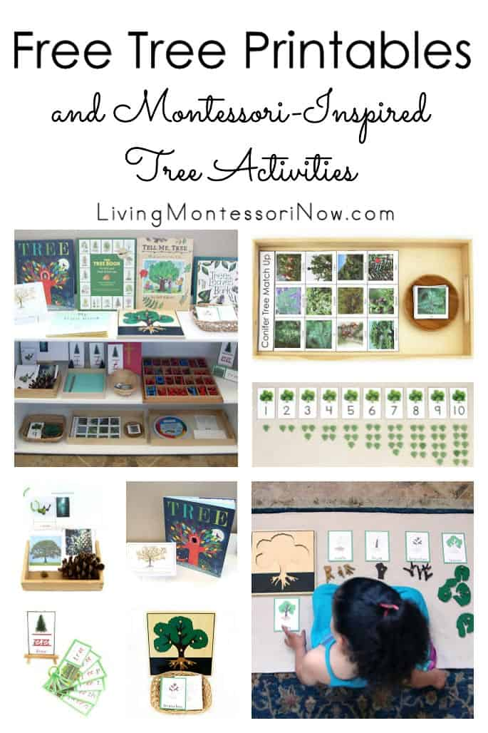 Free-Tree-Printables-and-Montessori-Inspired-Tree-Activities