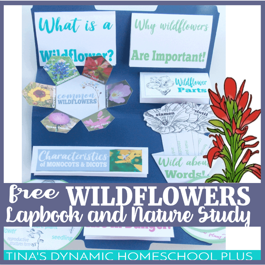 Wildflowers-Unit-Study-Hands-on-Activities-and-Lapbook-Fb