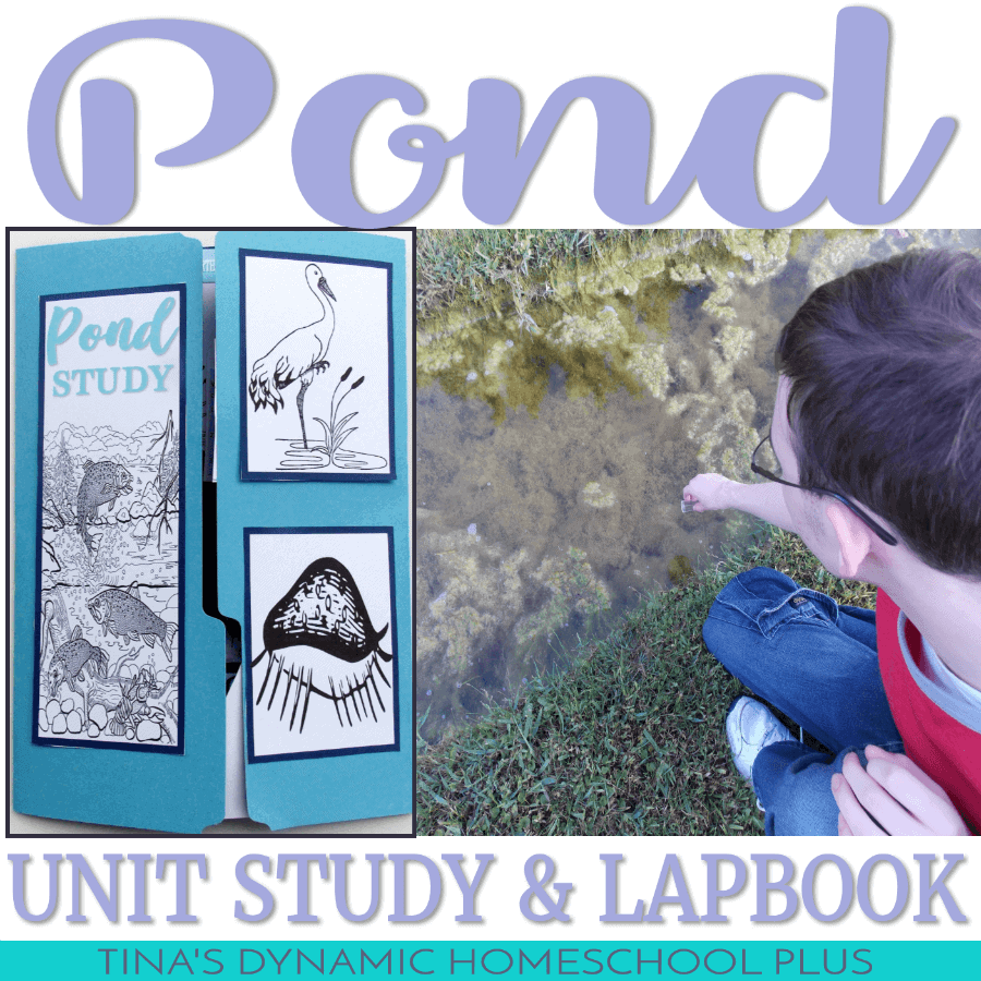 Above-and-Below-Pond-Unit-Study-and-Lapbook