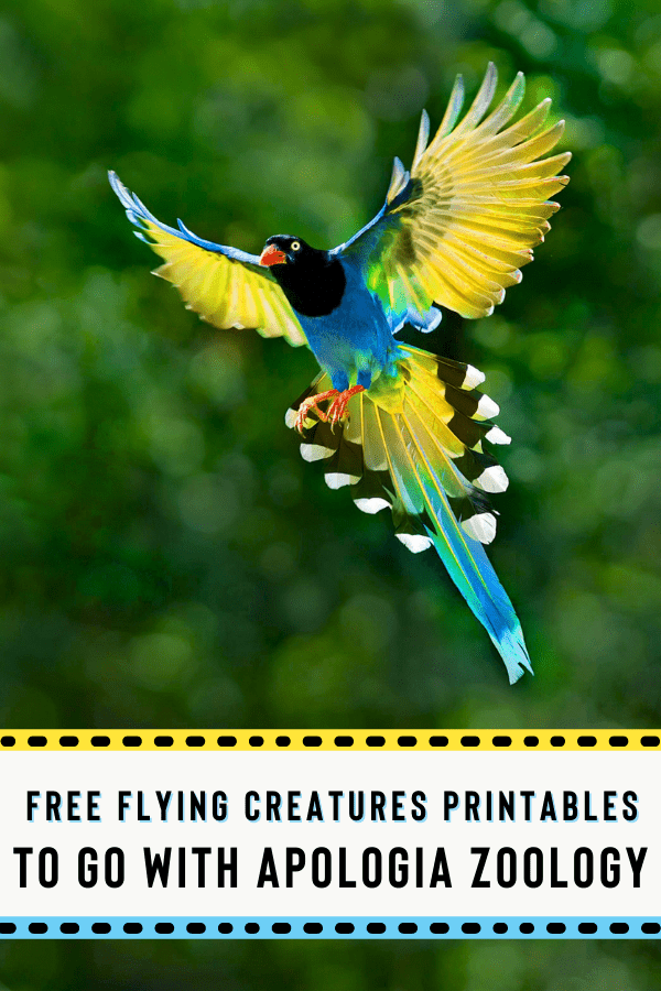 free flying creatures printables to go with apologia zoology