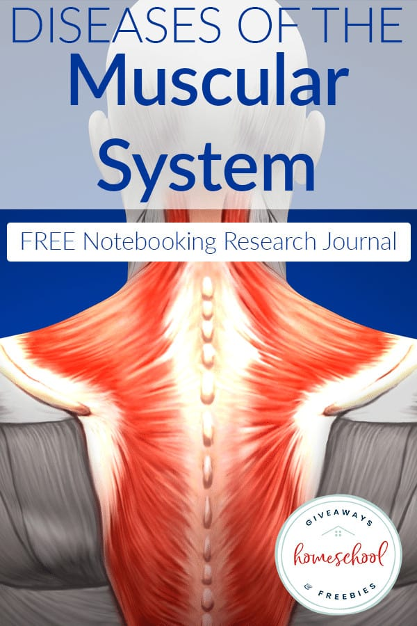 diseases-muscular-system-notebook