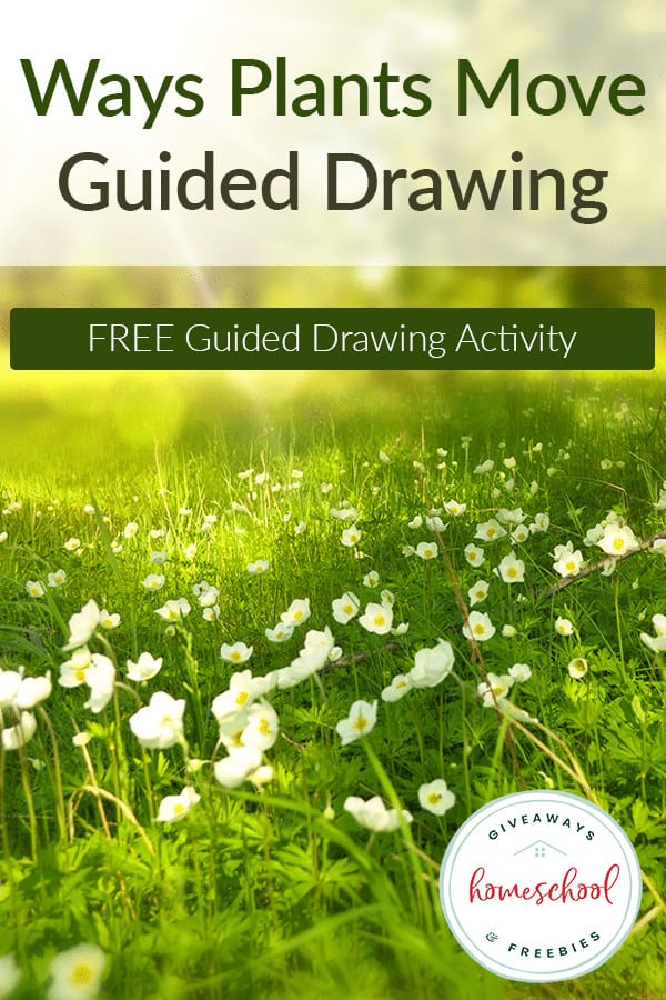 Guided-Drawing-Plant-Movements