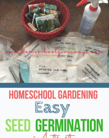 Homeschool Gardening: Easy Seed Germinating Activity