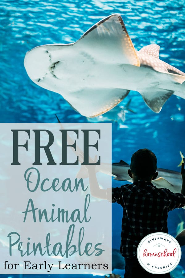 Summer is a great time to teach your little ones about ocean animals with these FREE Ocean Animal Printables! #oceananimals #homeschoolgiveaways #freeprintables