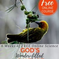 image of bird eating berries with text overlay. Free Online Course. 6-weeks of FREE online science. God's Wonderfilled Science: Birds, flight & feathers