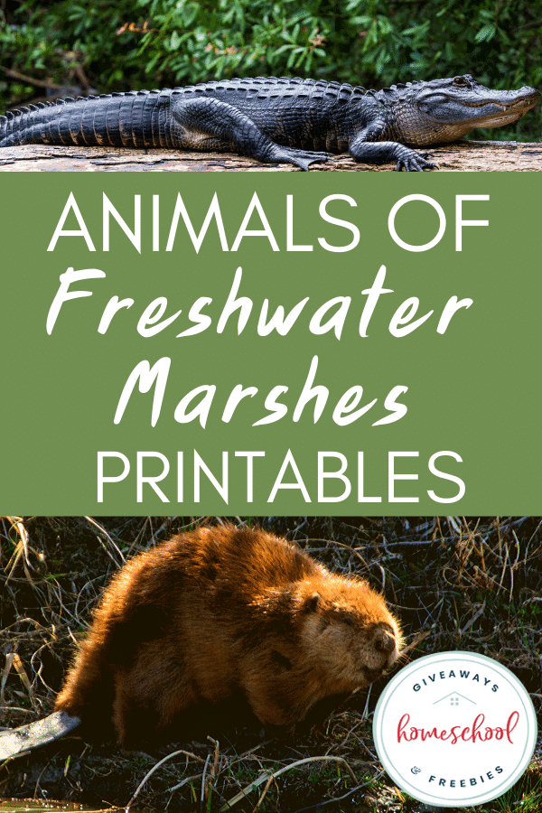 Animals of Fresh Water Marshes Printables.