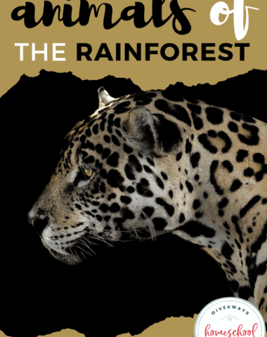 Animals of the Rain Forest.