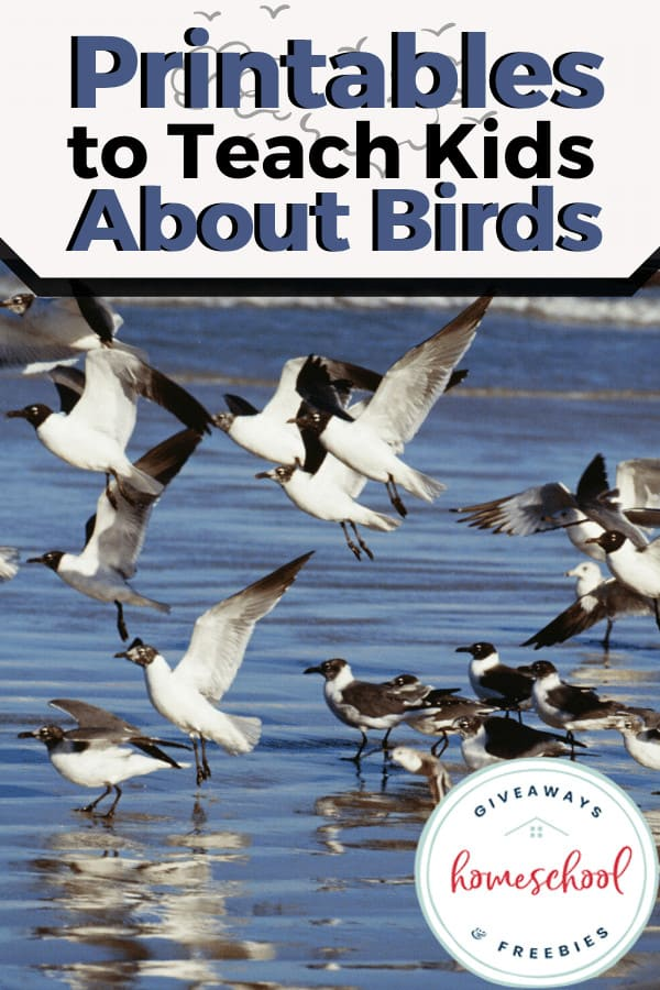 Resources to Help Your Kids Learn About Birds. #allaboutbirds #birdprintables