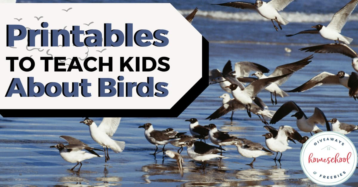 Resources to Help Your Kids Learn About Birds. #allaboutbirds #birdprintables #birdresources