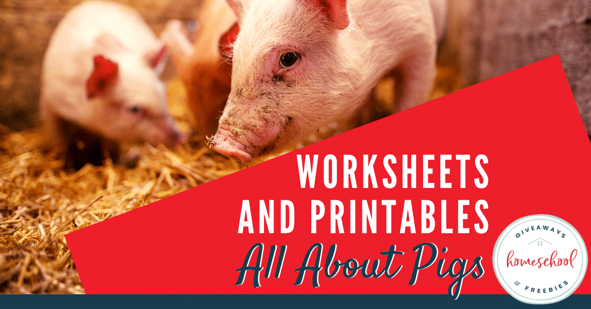 Worksheets and Printables All About Pigs. #allaboutpigs #learningaboutpigs #pigprintables #pigresources