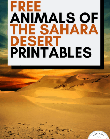 free animals of the sahara desert text with sahara desert sunset photo