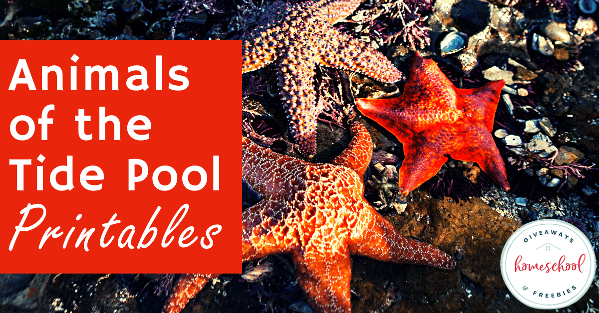 Animals of the Tide Pool Printables. #tidepools #tidepoolanimals #animalsoftidepools