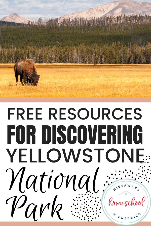 Free Resources for Discovering Yellowstone National Park text with a photo of a buffalo eating grass.