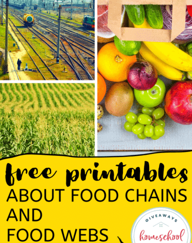 Free Printables About Food Chains and Food Webs. #foodchainprintables #foodwebprintables