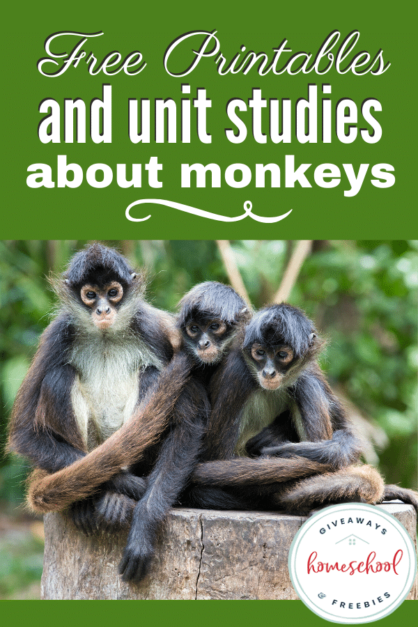 Free Printables and Unit Studies About Monkeys. #monkeyprintables #monkeyunitstudies #allaboutmonkeys