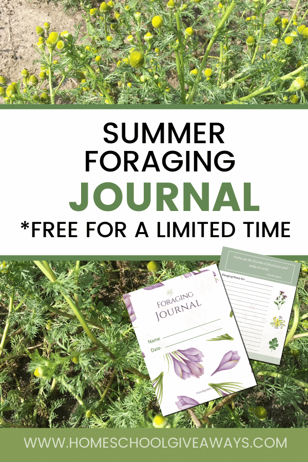 Summer foraging journal text overlay on background of chamomile