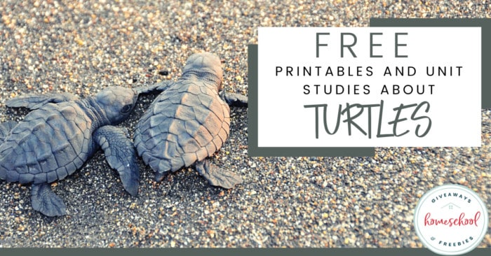 Free Printables and Unit Studies About Turtles. #printablesaboutturtles #unitstudiesaboutturtles #turtleresources
