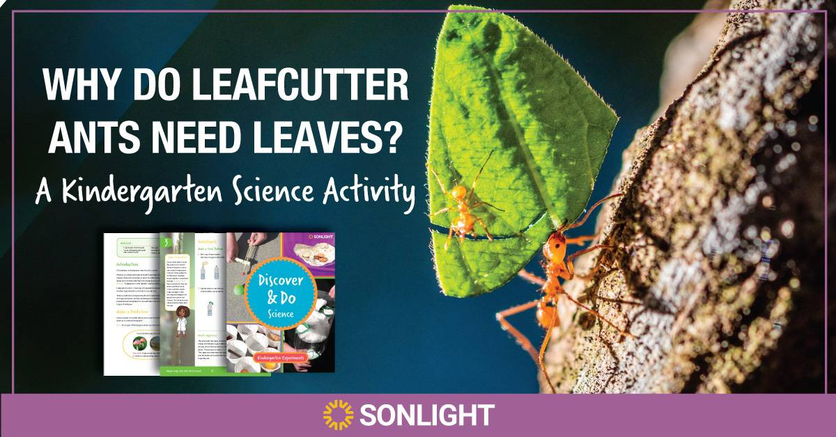 WHY DO LEAFCUTTER ANTS NEED LEAVES? A HANDS-ON ACTIVITY ABOUT FERMENTATION