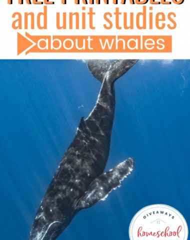 Free Printables and Unit Studies About Whales #whaleunitstudies #whaleprintables #whaleresources