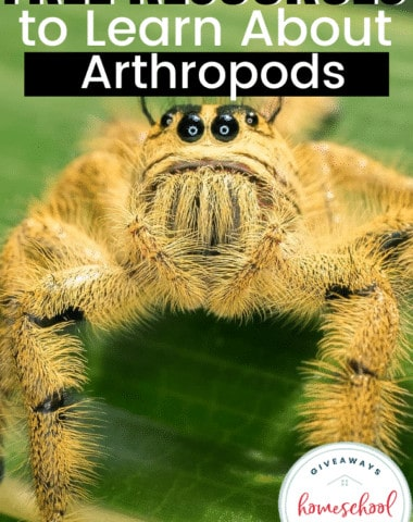 Free Resources to Learn About Arthropods. #arthropodsprintables #arthropodsresources