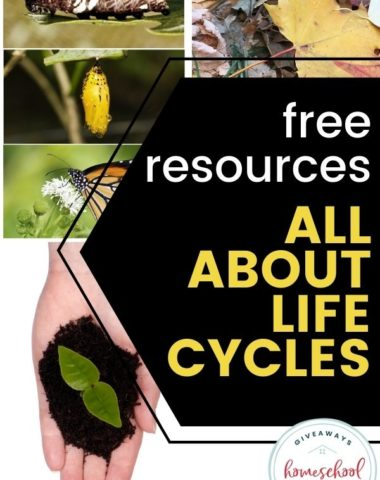 Free Resources All About Life Cycles. #allaboutlifecycles #lifecycles #lifecycleresources
