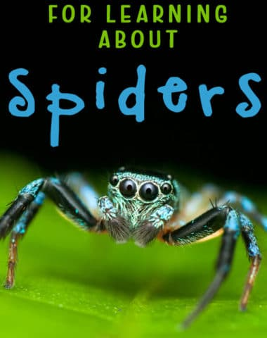 FREE Resources for Learning about Spiders