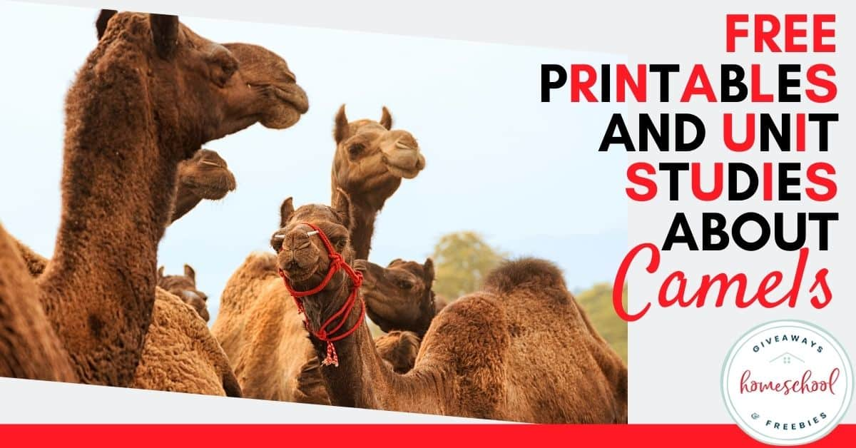 Free Printables And Unit Studies About Camels. #camelprintables #camelresources #camelunitstudies