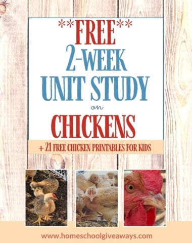 Free 2-week unit study on chickens text overlay on images of chicks in a run.