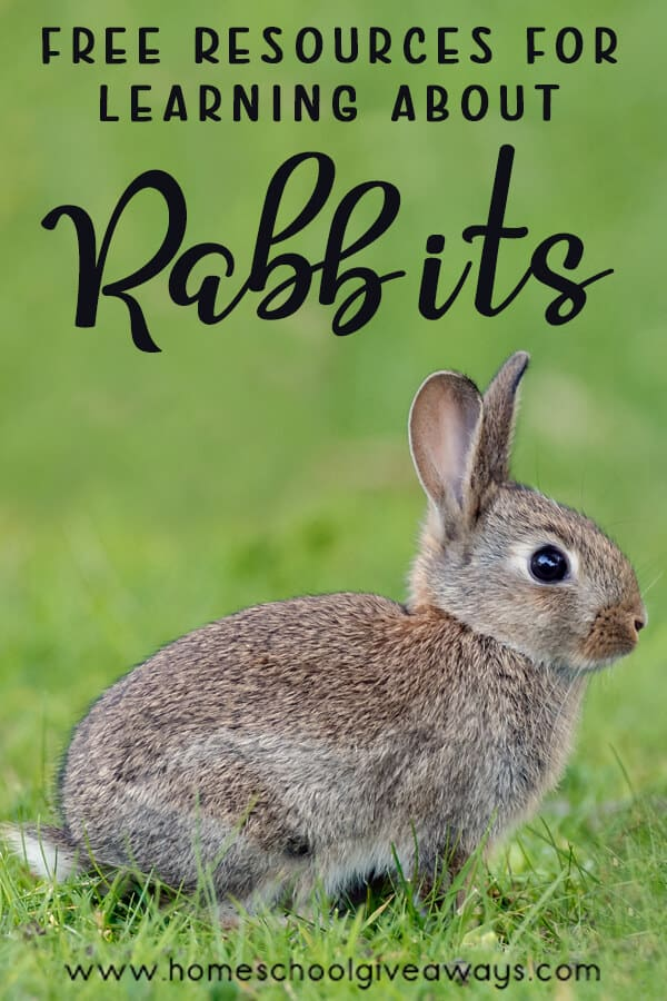 Resources for Learning About Rabbits